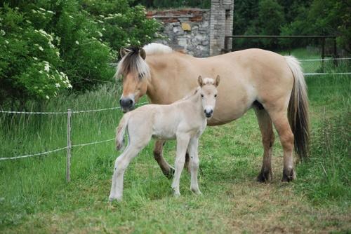 Vater: Birkens Odin / Mutter: Mastrups Sira